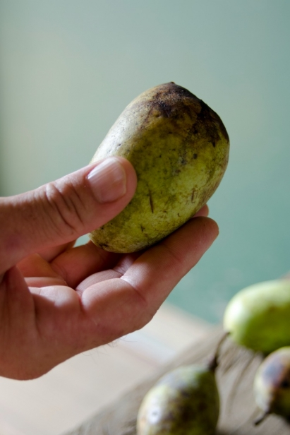 Way Down Yonder in the Pawpaw Patch | Edible Upcountry